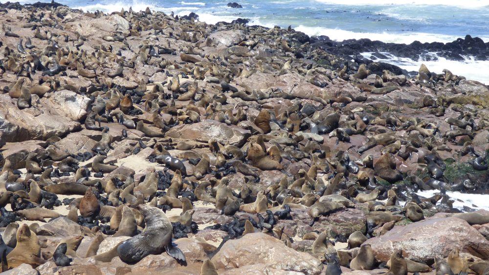 Robbenkolonie an Cape Cross