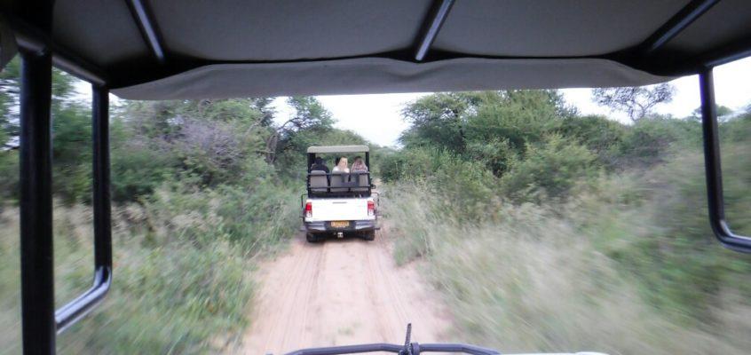 Auf Nashorn-Safari im Khama-Schutzgebiet, Botsuana