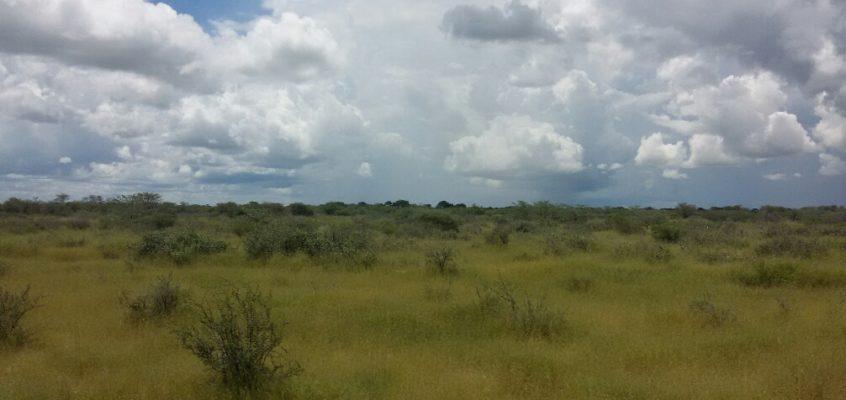 Kalahari trifft Realität