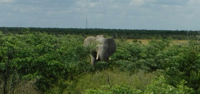 Die Elefanten-Etappe