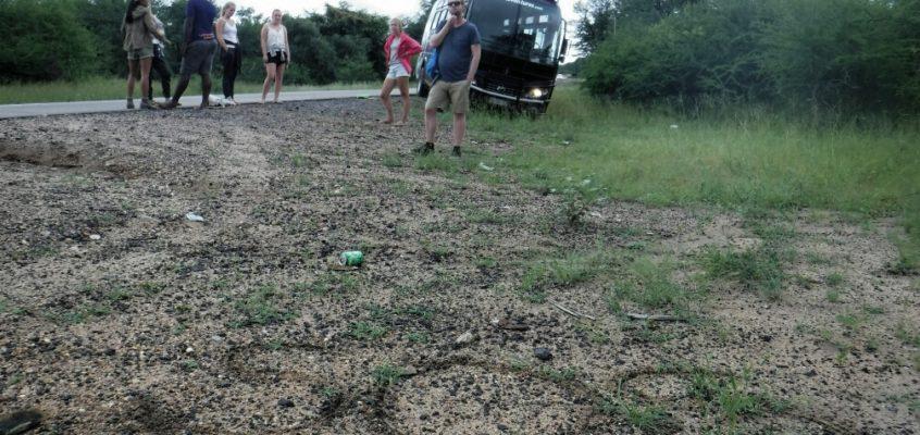 Abenteuertag in Simbabwe