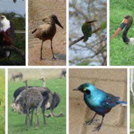 Die Vögel Afrikas