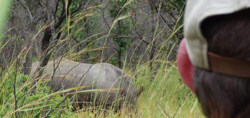 Nashörner in Gefahr!