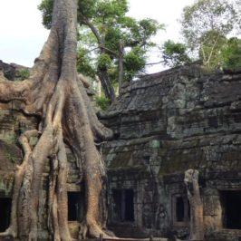Ta Prohm & Co: auf den Spuren Lara Crofts durch Angkor