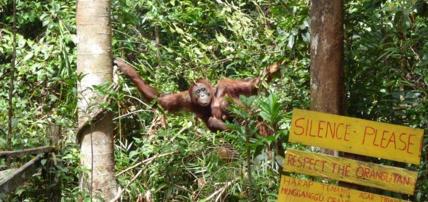 Flussfahrer und Waldmenschen im Dschungel Borneos