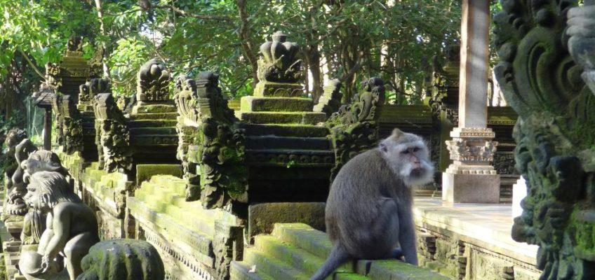 Bali: 100 Stufen Grün