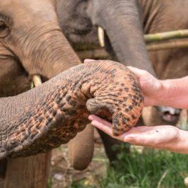 Elefantencamp: Kuscheln mit den grauen Riesen