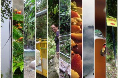 Wandertag im Bergnebelwald von Ecuador – #12von12