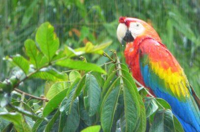 Regentage im Regenwald