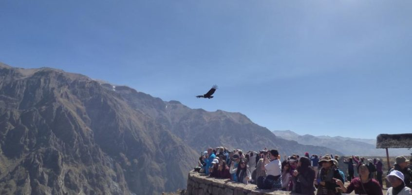 Colca Canyon: Bei den Giganten der Lüfte
