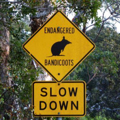 Achtung, Bandicoots! (Australien)