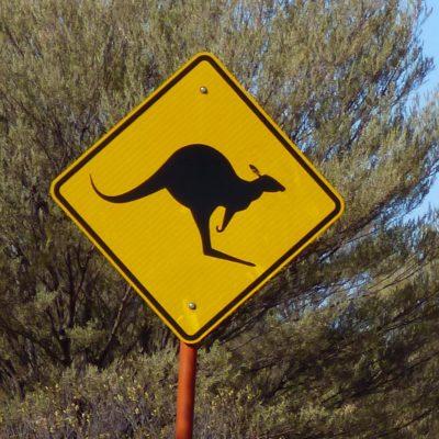 Achtung, Kangurus! (Australien)