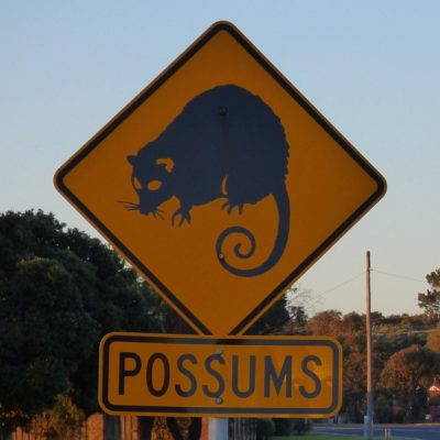 Achtung, Possums! (Australien)