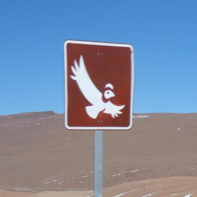 Achtung, Condor im Anflug! (Chile)