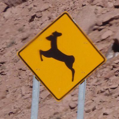 Achtung ... Alpakas? (Chile)