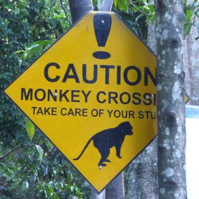 Achtung, die Affen greifen an! (Indonesien)