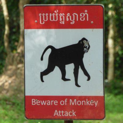 Achtung, die Affen greifen an! (Kambodscha)