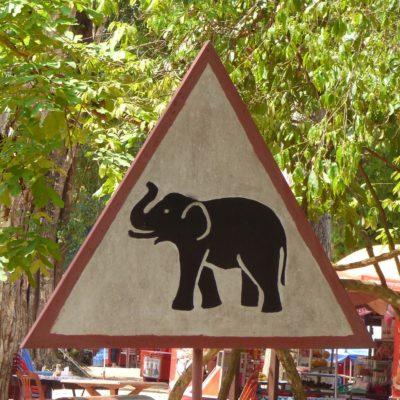 Achtung, Elefanten! (Kambodscha)
