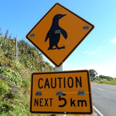 chtung, süße kleine Pinguine! (Neuseeland)