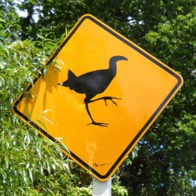 Achtung, wildgewordenen Wekas! (Neuseeland)